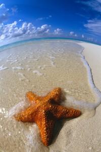 Waves Around Starfish